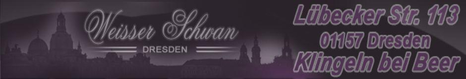 Weißer Schwan in Dresden